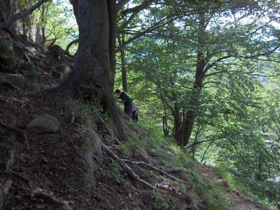 suoni del bosco